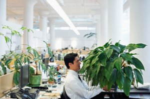 Office Plant Mold
