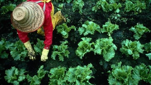 Is Your Garden Soil Safe?